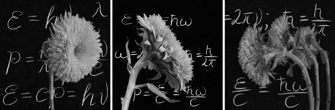 Sunflowers in front of phisics equations on the blackboard